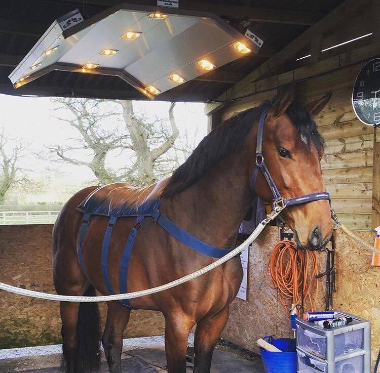 Horse Solarium, Nemo enjoying a pamper - Image courtesy SG Sports Horses -