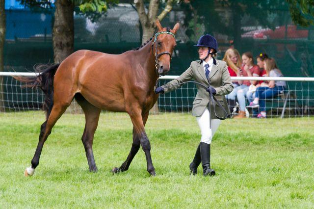 World Horse Welfare Hamgrove Chrystal - 1st in-hand under 4 yrs