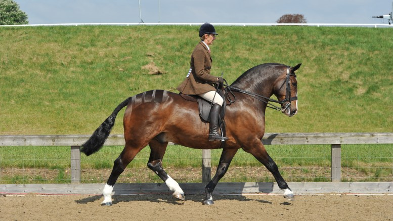 Winter Showing Tips with Jayne Ross