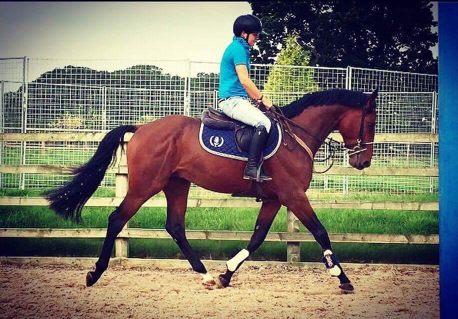British Equestrian Federation Backs Equestrian Employment