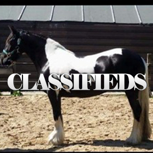 equestrian classified