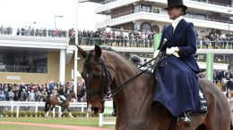 The Peter O'Sullevan Charitable Trust to sponsor RoR parades - Former Arkle Chase winner Forpadydeplasterer, seen ridden here side-saddle by Joanne Quirke, in the RoR Parade at the 2016 Cheltenham Festival