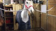 Steph Gumn new horse, due to arrive shortly at SG Sports Horses