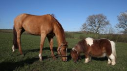 12 essential equine first aid tips from Blue Cross