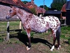 Very pretty mare