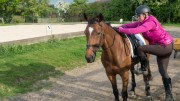 Mounting an ex-racehorse requires training to stand still