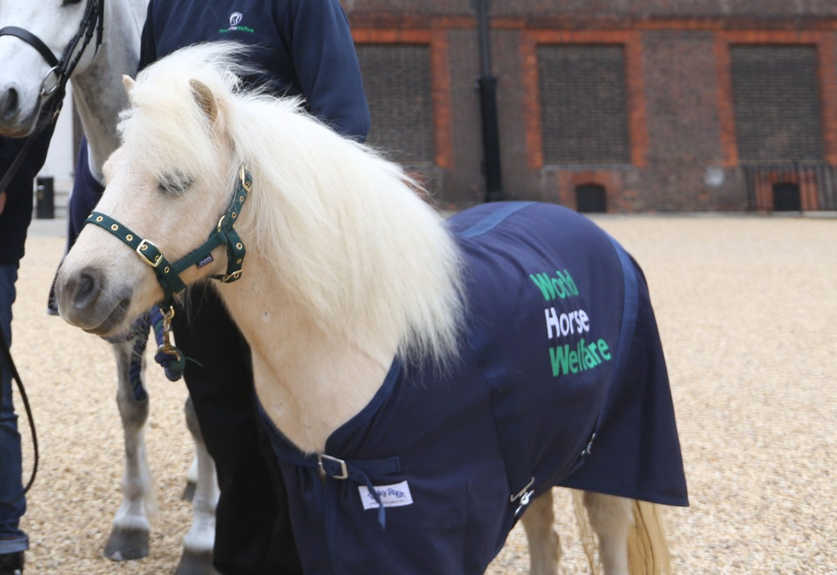 Shetland to Compete at Burghley Horse Trials