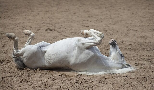 types of colic in horses