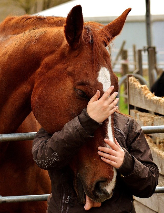 Myths about Horse Owners