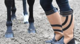 Harry Hall shoes for rider and horse competition image