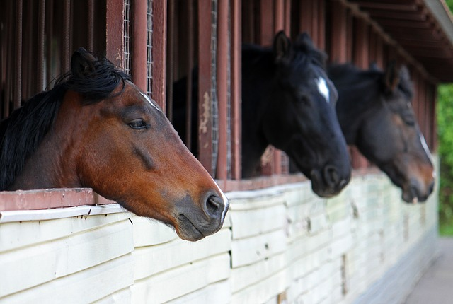 Equine Vaccinations – Is Your Horse Fully Protected