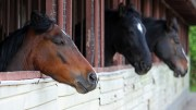 Equine Vaccinations - Is You Horse Fully Protected