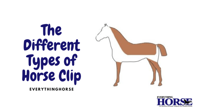 The Different Types of Horse Clip