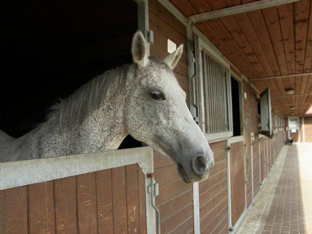 Reducing Inflammatory Airway Disease in Horses