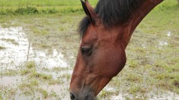 How to keep your horse hydrated over winter