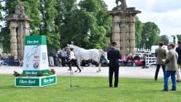 Bramham International Horse Trials -Vet inspection Sunday