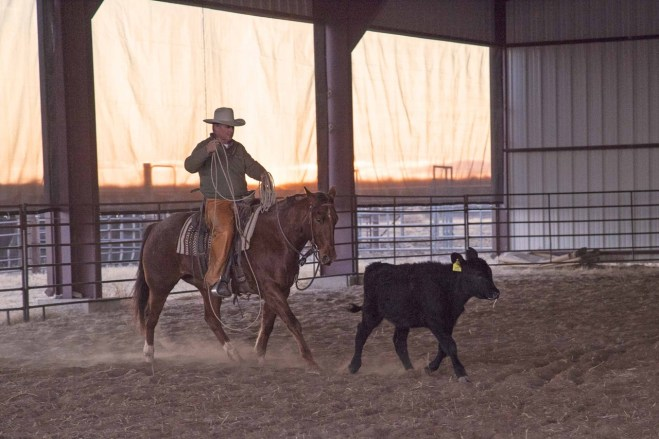 Joe Wolter getting his horse hooked on a cow. Note how horse and calf's feet are in sync