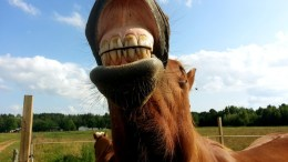 Dental Disease A Significant Problem in UK Horses