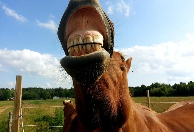 Dental Disease A Significant Problem in UK Horses