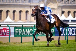 Horse Racing News   Everything Horse