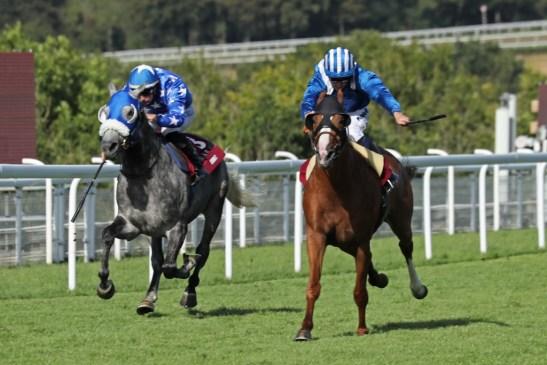 Qatar International Stakes ©equinecreativemedia.com