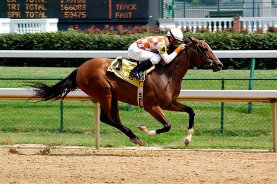 Photo by Jeff Kubina CC BY-NC 2.0 Caption: Today's racehorses perform better than ever thanks to advances in technology