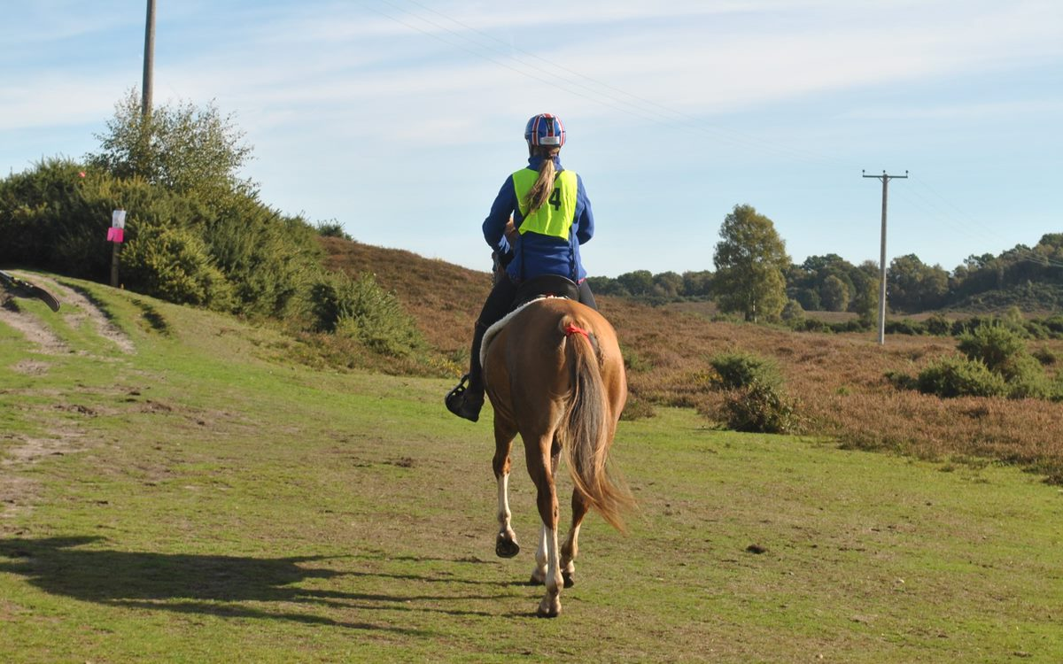 Endurance - Tracey Rose JT Copper Moon New Forest Ride