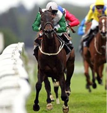 Kimblewick Point-to-Point, How to Make Sure to Bet Responsibly?