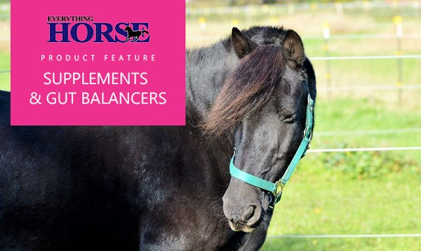 Supplements and gut balancers for horses
