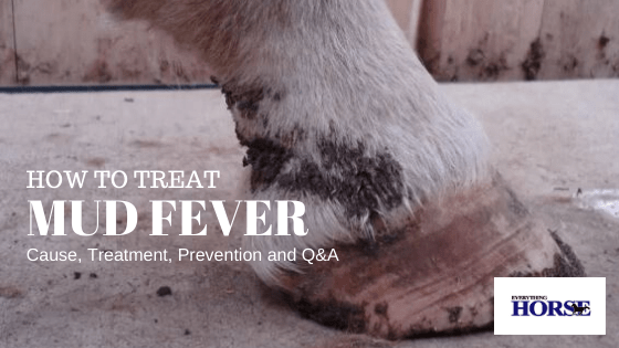 how to treat mud fever, image of horse's hoof with mud fever