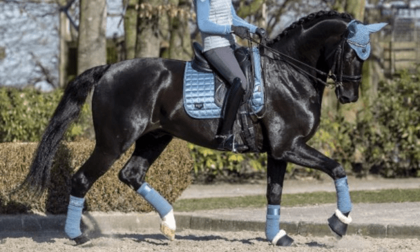 Matchy-Matchy Horse Numnah Sets to Get You Motivated