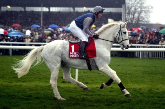 The attributes that make a winning racehorse
