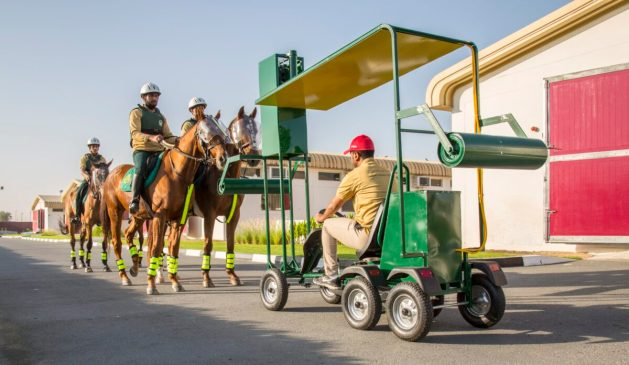 Racehorses being trained for Police Work