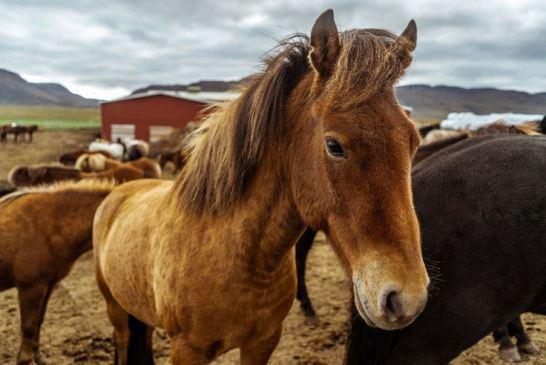 precautions to prevent horse illness