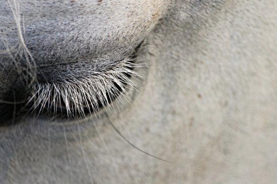 Horses make great friends