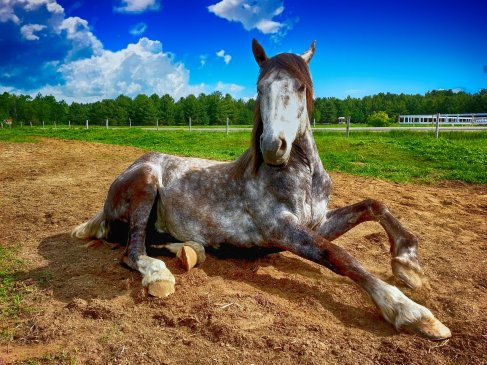 Top Reasons Why You Should Buy a Horse