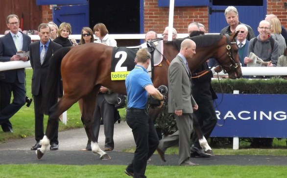 """""""Frankel"""" (CC BY 2.0) by monkeywing - image to represent sussex stakes"""