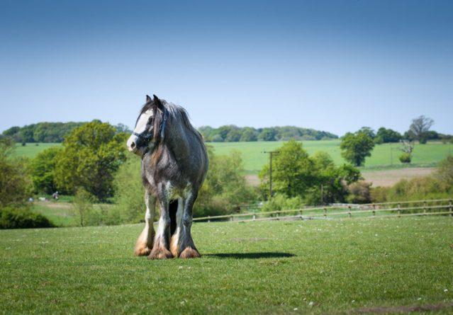 Remus Horse Sanctuary Fun Day September 2020