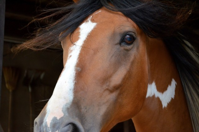 Glucosamine for horses