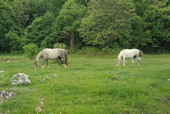 Glucosamine Dosage For Horses