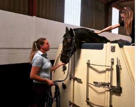 Equine spa Breaks Devon Equine Hydrotherapy Spa