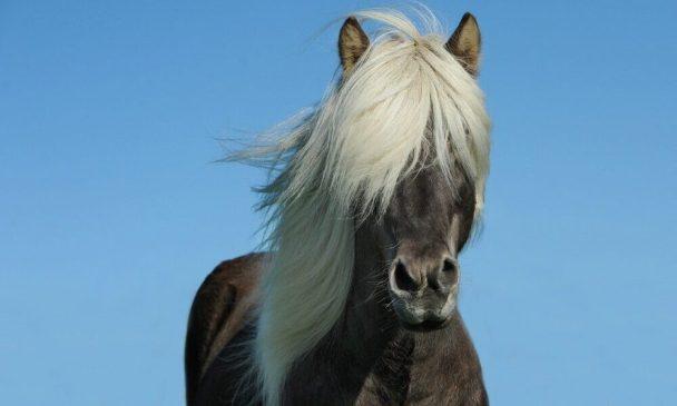 The Best Mane and Tail Detangler For Horses