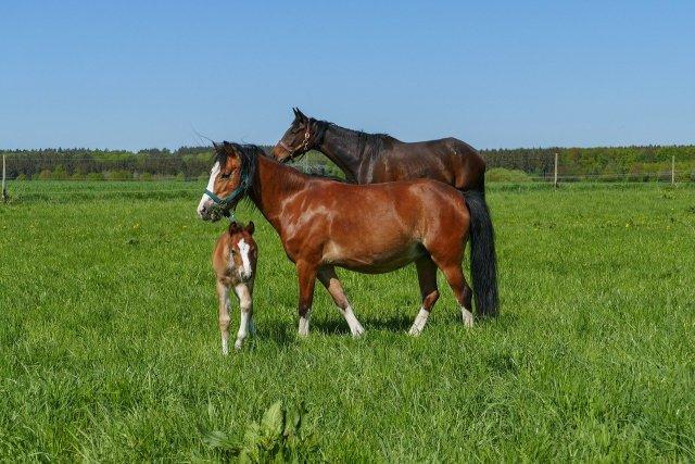 Horse's Digestive System Free Webinar