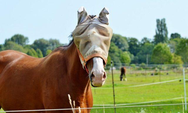 Repelling Horse Flies