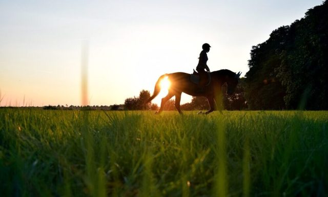 Summer Horse Health