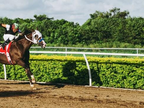 Horse racing on track with jockey