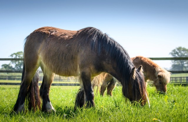Remus Horse Sanctuary Open Day June 2021
