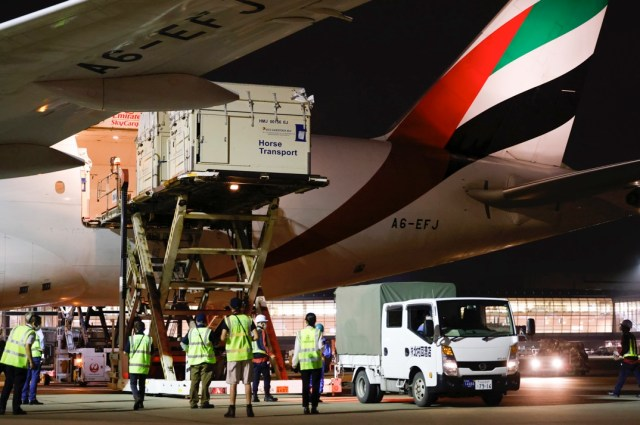 Haneda history-making: the first full cargo load of horses ever to land in Tokyo's Haneda airport ready for the Tokyo 2020 Olympic Games Equestrian competitions. © FEI/Yusuke Nakanishi.