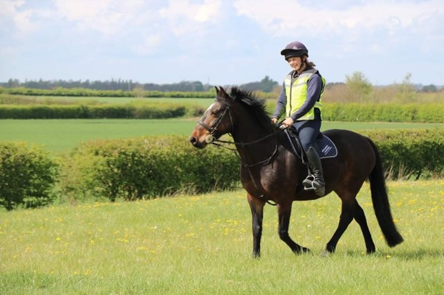 5 Top Tips for Horse Owners