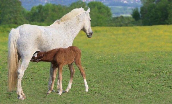 equine mental wellbeing webinar